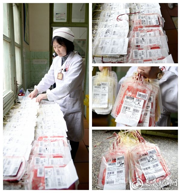 (护士长邓艳霞正在整理刘丽输过的血袋)