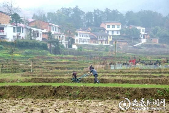 花山村农民用耕整机在犁田