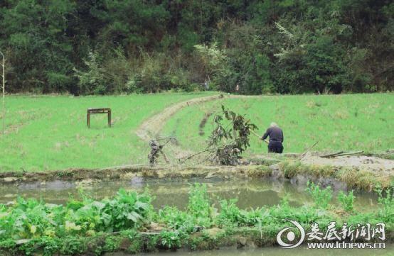 白碧村农民在忙着挖田