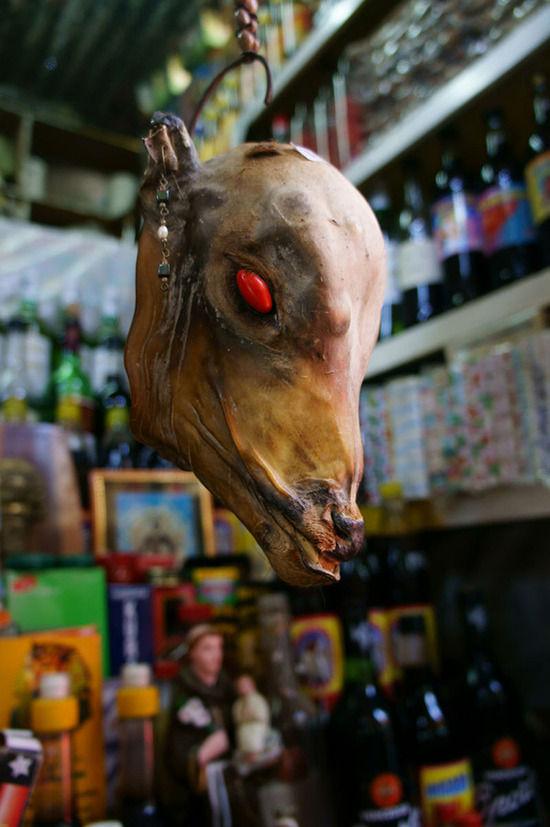 秘鲁人相信这种在眼睛部位镶嵌了大相思豆的小羊驼头骨能够抵挡诅咒