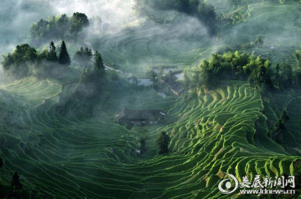紫鹊界绿色家园——罗中山