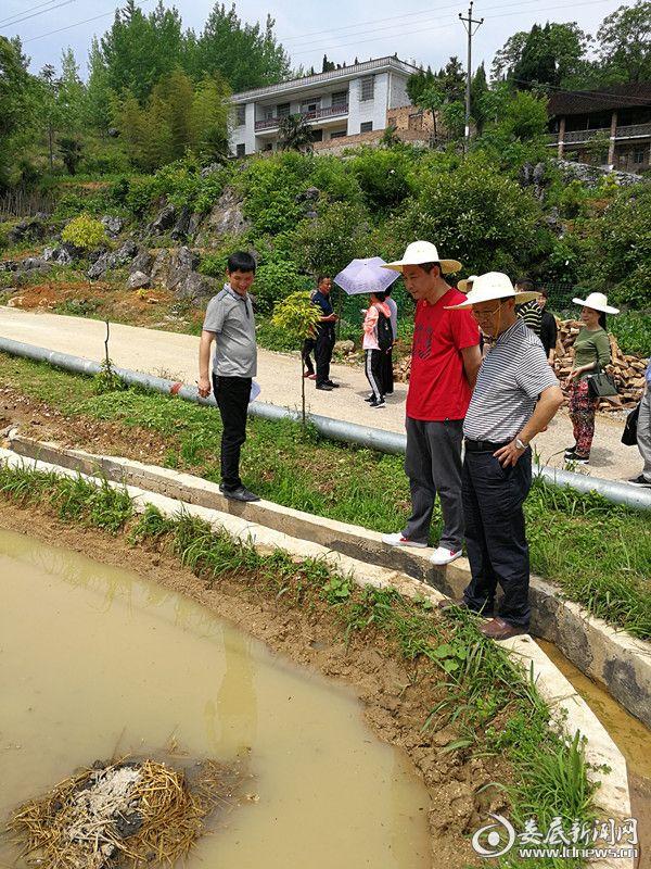 图为苏立(右二)、李建设(右一)在察看稻田养鱼情况_副本