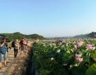 花卉产业引爆锁石乡村旅游