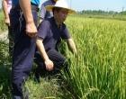 双峰县领导到甘棠镇检查指导抗旱工作