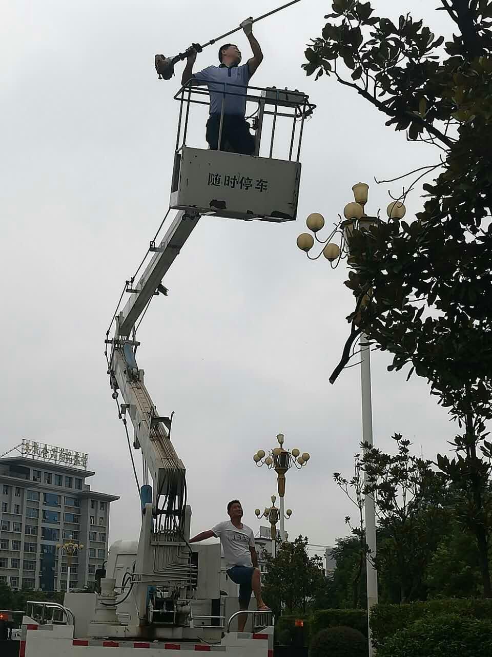 娄底市园林处园林工人清理树木枯枝 消除安全隐患