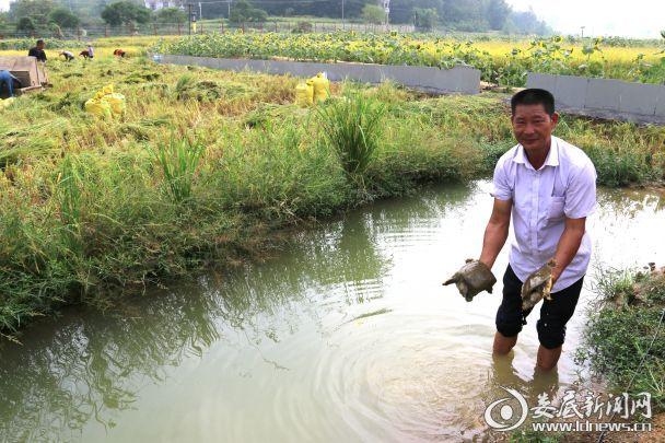 基地工作人员展示捕捉的甲鱼