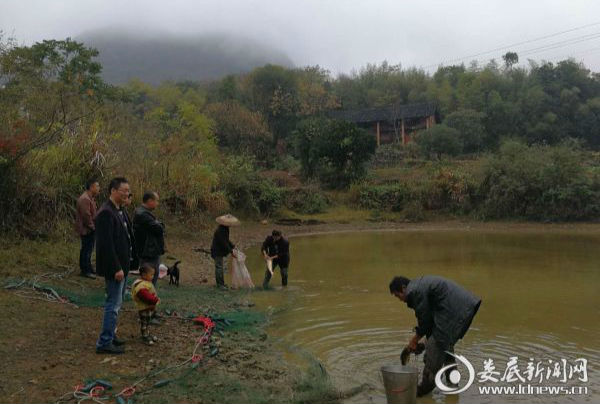 图为党委委员彭和军在鱼塘边