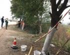 双峰县公路局开展冬季行道树刷白工作