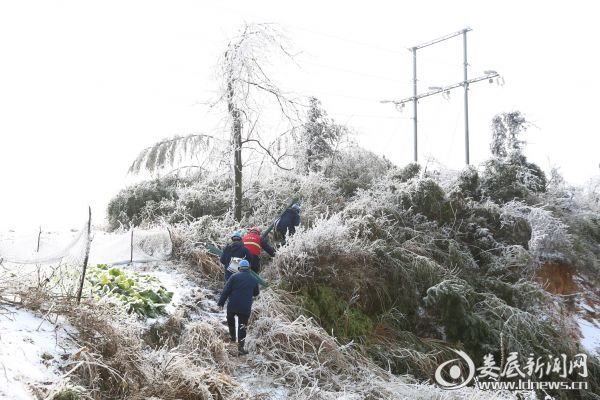 图为国网娄底供电公司城北供电所副所长龚俊华带着工友蔡爱华、范福桃、吴滕桂在雪中徒步巡线。(肖璋 摄)