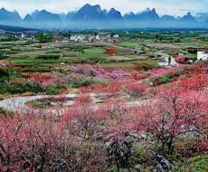 桃红又见一年春 带你探寻广西的十里桃林