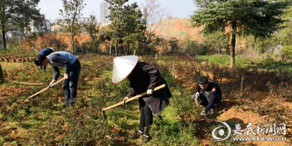 春季,娄底市风景园林管理处科研所园林工人加班加点加大绿色植物的管理养护力度