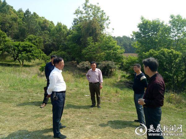 工作组和镇村干部现场探讨杨梅园发展思路