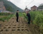 禾青镇禁毒办迅速铲除非法种植罂粟121株