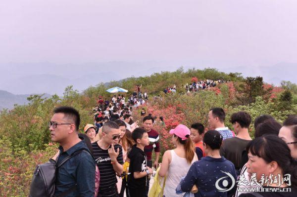 (景区人来人往,接踵而来,从这个山头到那个山头一支长长的游人队伍在花海中来回荡漾。 摄影/陈杨剑)