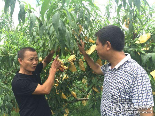 (王修明(左)在向新化县养殖专业户传授种植和管理技术)