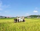 """早稻亩产556.8公斤 洪山殿镇""""三一""""工程项目获高产"""