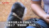 """小猿猴""""赖上""""救它的警察妈妈 简直被萌化"""