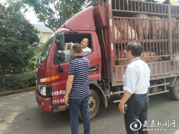 万宝镇畜牧站工作人员在对过往生猪运输车辆进行临检