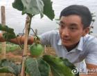 龙塘镇90后青年返乡创业 成功引种热带水果黄金百香果