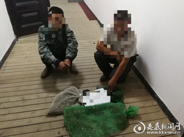 两犯罪嫌疑人指认所猎捕的野生鸟类(鹌鹑)