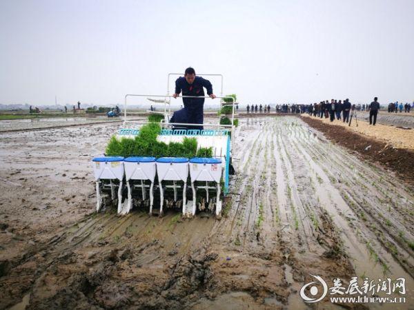 图5.水稻高速插秧机现场作业