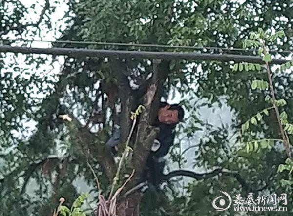 砍青1_meitu_1