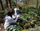 新化县槎溪镇油坪溪村当选天下100个科技树模村