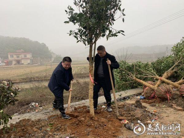杏子铺镇党委书记、镇长植树现场2
