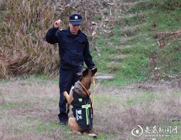 """(冷水江公安新增 """"警犬卫士"""",全面加强巡防安保力量)"""