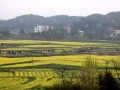 娄底双峰举行第九届油菜花节 农旅上界一体助力乡村振兴