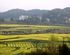 娄底双峰举行第九届油菜花节 农旅一体助力乡村振兴