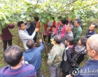 新化县双林村举办黄桃和猕猴桃栽培技术培训班 助推脱贫产业发展