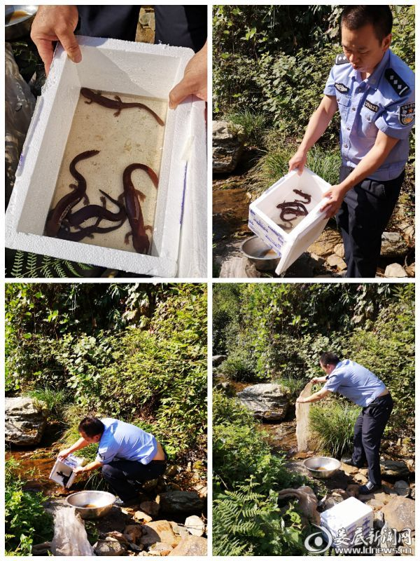 民警将缴获的野生动物放回大自然图2