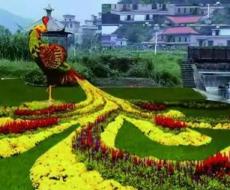 百萬菊花綻放船山故里,國慶共賞湖南最大的菊花盛宴