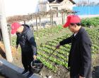 新化县林业局巩固省级卫生县城创建工作