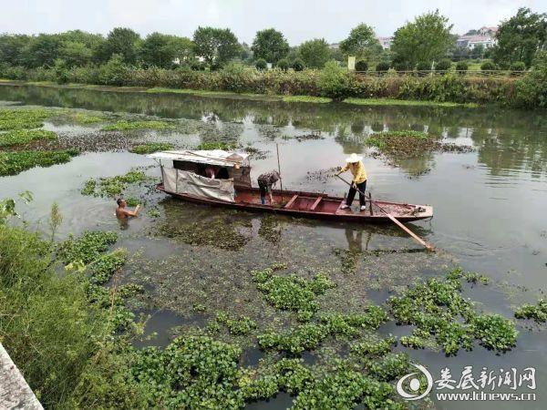 水葫芦清理打捞