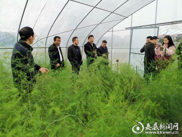 参观黄马洲村芦笋产业园1