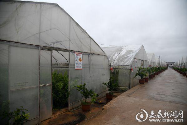 黄马洲现代农业产业园