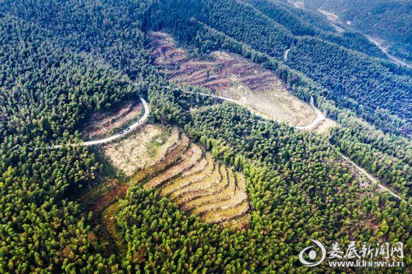 油茶林基地