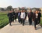 琅塘镇:考察油菜基地 助力乡村振兴