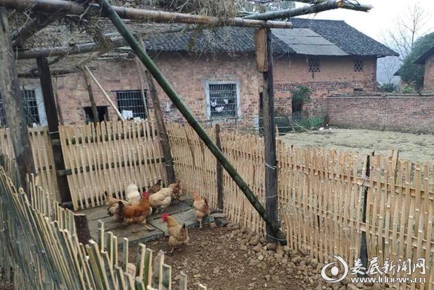 冷水江三尖镇石船村将卫生习惯纳入村规民约,村民由以前散养喂鸡变为圈养