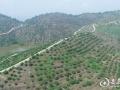 新化2万亩杨梅基地挂果 记者带你走进酸酸甜甜的世界