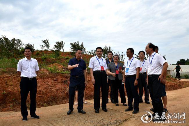 4、代表们在梓门桥镇黄马洲村鸿程红心橙农民专业种植合作社种植基地考察调研
