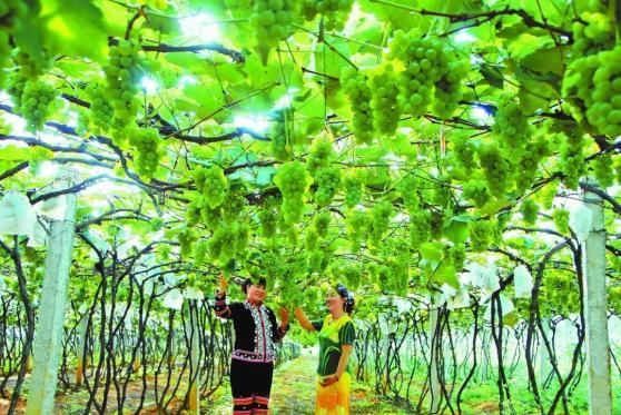 """《【恒达主管】红河州:端起""""绿饭碗"""" 吃上""""生态饭""""》"""