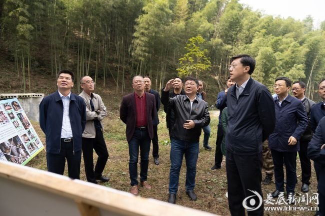 (图一:刘非在石牛乡两丝洪家村竹产业基地,了解竹木培育采伐情况)
