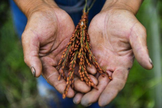 《【恒达总代理】第一观察丨中央经济工作会议,为何强调解决好种子问题?》