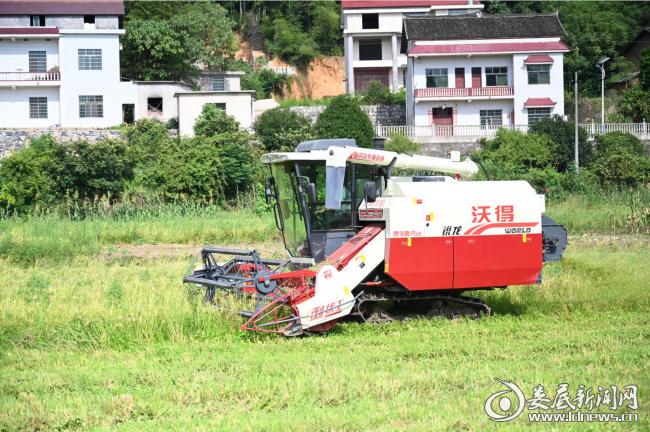 (远宏农机专业合作社负责人曾光龙正在抢收早稻)