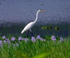 【镜像娄底】龙湾:稻黄·荷香·鹭飞